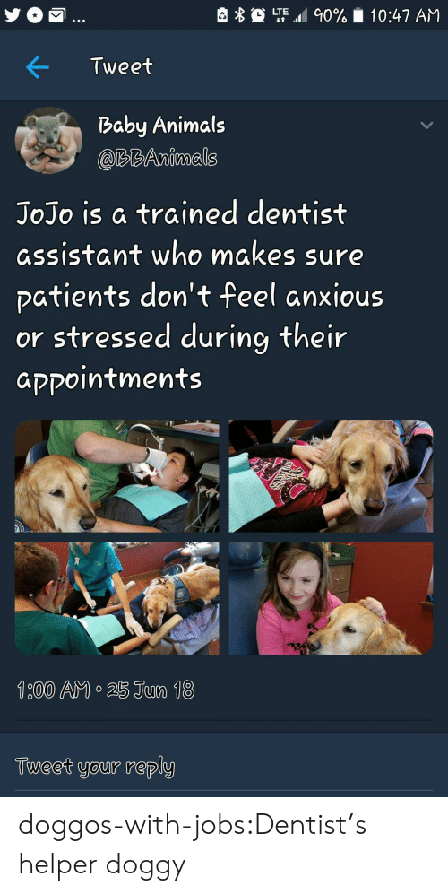 Baby Animals: LTE.al 90%  10:47 AM  Tweet  Baby Animals  @RBAnimals  JoJo is a trained dentist  assistant who makes sure  patients don't feel anxious  or stressed during their  aקקointments  Tueet your reply doggos-with-jobs:Dentist's helper doggy