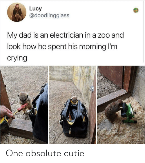 Crying, Dad, and Lucy: Lucy  @doodlingglass  My dad is an electrician in a zoo and  look how he spent his morning I'm  crying One absolute cutie