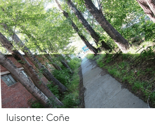 Tumblr, Blog, and Media: luisonte: Coñe