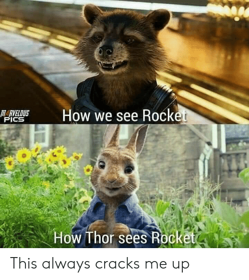 rocket: M  How we see Rocket  HARVELDUS  PICS  How Thor sees Rocketo This always cracks me up