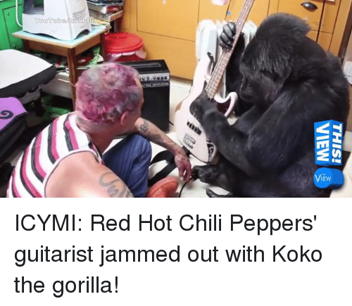 Chilis, Memes, and Red Hot Chili Peppers: M31  NaIN  iSIHL  Youtrolbaebm ICYMI: Red Hot Chili Peppers' guitarist jammed out with Koko the gorilla!