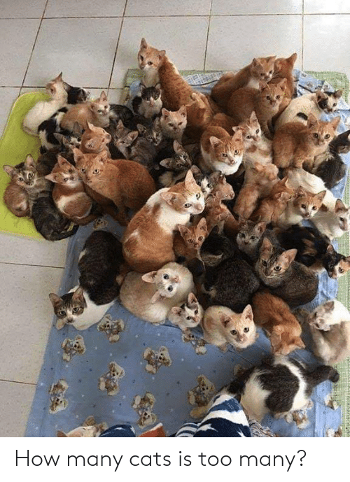 Cats, Memes, and 🤖: MA How many cats is too many?