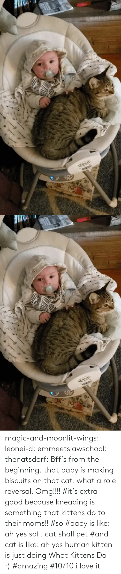D: magic-and-moonlit-wings: leonei-d:  emmeetslawschool:  thenatsdorf: Bff's from the beginning. that baby is making biscuits on that cat. what a role reversal.    Omg!!!!     #it's extra good because kneading is something that kittens do to their moms!! #so #baby is like: ah yes soft cat shall pet #and cat is like: ah yes human kitten is just doing What Kittens Do :) #amazing #10/10 i love it