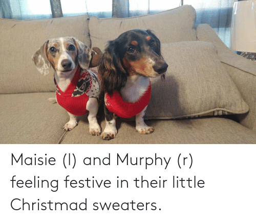 sweaters: Maisie (l) and Murphy (r) feeling festive in their little Christmad sweaters.