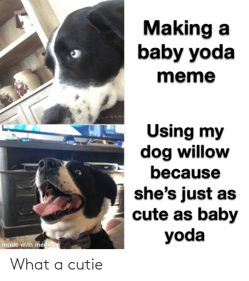 willow: Making a  baby yoda  meme  Using my  dog willow  because  %24  she's just as  cute as baby  yoda  made with mematic What a cutie
