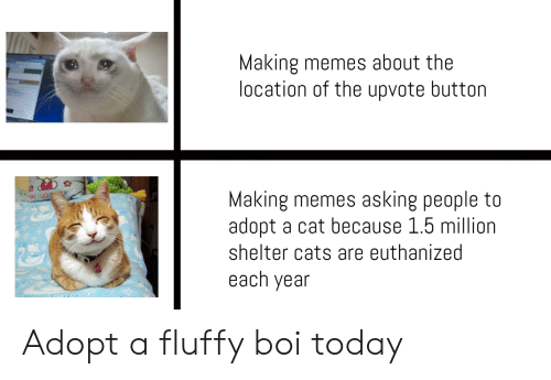 Memes Asking: Making memes about the  location of the upvote button  Making memes asking people to  adopt a cat because 1.5 million  HENO TY  shelter cats are euthanized  each year Adopt a fluffy boi today