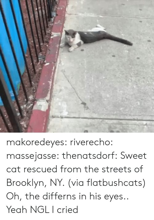 Streets: makoredeyes:  riverecho: massejasse:  thenatsdorf: Sweet cat rescued from the streets of Brooklyn, NY. (via flatbushcats) Oh, the differns in his eyes..     Yeah NGL I cried
