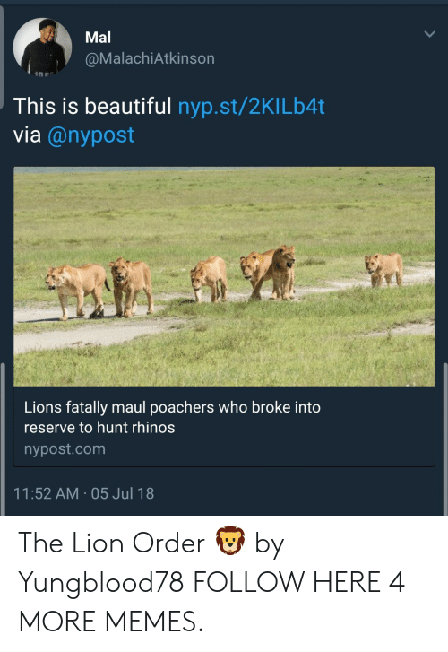 Lion Order: Mal  @MalachiAtkinson  This is beautiful nyp.st/2KILb4t  via @nypost  Lions fatally maul poachers who broke into  reserve to hunt rhinos  nypost.com  11:52 AM 05 Jul 18 The Lion Order 🦁 by Yungblood78 FOLLOW HERE 4 MORE MEMES.