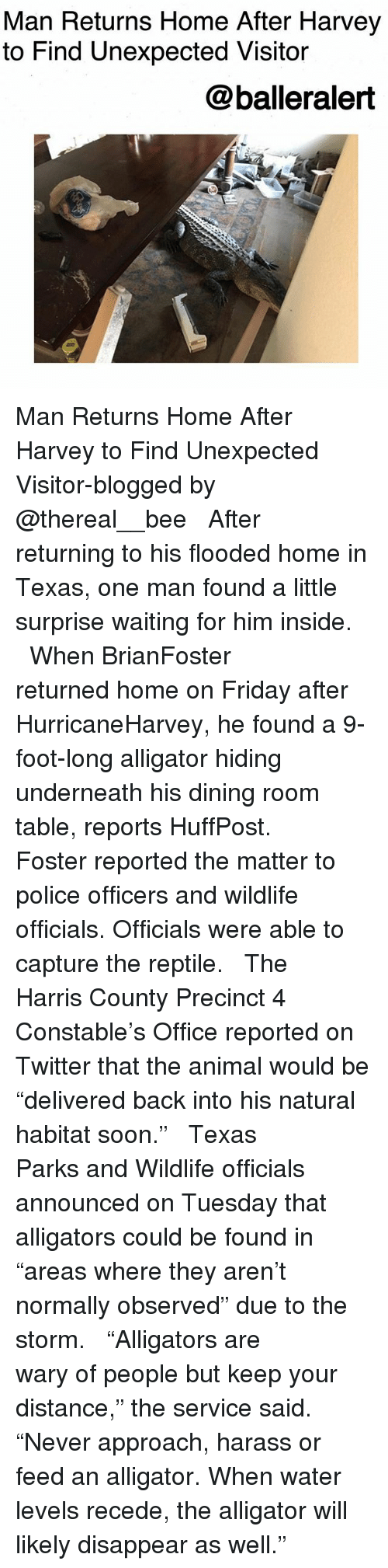 "homed: Man Returns Home After Harvey  to Find Unexpected Visitor  @balleralert Man Returns Home After Harvey to Find Unexpected Visitor-blogged by @thereal__bee ⠀⠀⠀⠀⠀⠀⠀⠀⠀ ⠀⠀ After returning to his flooded home in Texas, one man found a little surprise waiting for him inside. ⠀⠀⠀⠀⠀⠀⠀⠀⠀ ⠀⠀ When BrianFoster returned home on Friday after HurricaneHarvey, he found a 9-foot-long alligator hiding underneath his dining room table, reports HuffPost. ⠀⠀⠀⠀⠀⠀⠀⠀⠀ ⠀⠀ Foster reported the matter to police officers and wildlife officials. Officials were able to capture the reptile. ⠀⠀⠀⠀⠀⠀⠀⠀⠀ ⠀⠀ The Harris County Precinct 4 Constable's Office reported on Twitter that the animal would be ""delivered back into his natural habitat soon."" ⠀⠀⠀⠀⠀⠀⠀⠀⠀ ⠀⠀ Texas Parks and Wildlife officials announced on Tuesday that alligators could be found in ""areas where they aren't normally observed"" due to the storm. ⠀⠀⠀⠀⠀⠀⠀⠀⠀ ⠀⠀ ""Alligators are wary of people but keep your distance,"" the service said. ""Never approach, harass or feed an alligator. When water levels recede, the alligator will likely disappear as well."""