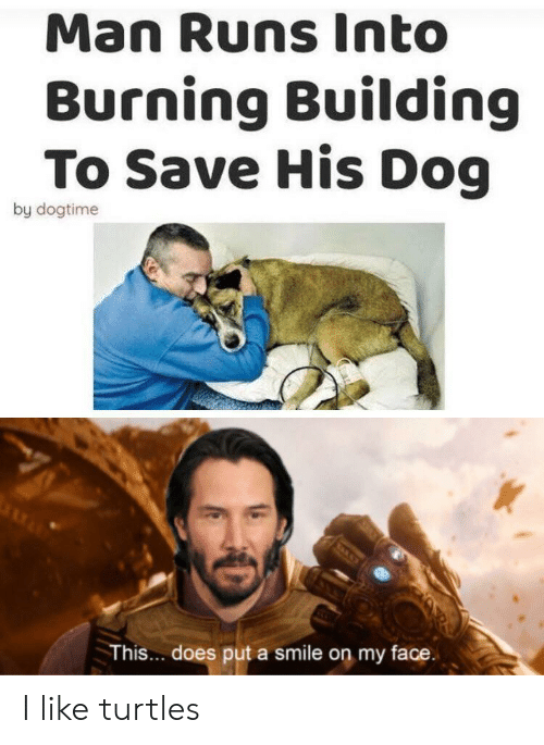 Smile, Dog, and Turtles: Man Runs Into  Burning Building  To Save His Dog  by dogtime  This... does put a smile on my face. I like turtles