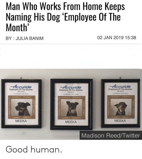 Twitter, Good, and Home: Man Who Works From Home Keeps  Naming His Dog 'Employee Of The  Month'  02 JAN 2019 15:38  BY JULIA BANIM  Accuride  Accuride  Accuride  Employee Of The Quarter  04-2016  Employee Of The Quarter  Q2-2016  Employee Of The Quarter  Q3-2016  SouEaste Sales Center  SoueNEastem Sales Center  SouthEasm Sas Cente  МЕЕКА  МЕЕКА  МЕЕКА  Madison Reed/Twitter Good human.