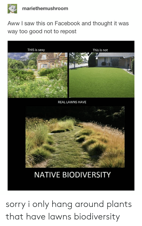 Aww, Facebook, and Saw: mariethemushroom  Aww I saw this on Facebook and thought it was  way too good not to repost  THIS is sexy  This is not  REAL LAWNS HAVE  NATIVE BIODIVERSITY sorry i only hang around plants that have lawns biodiversity