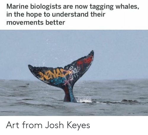 whales: Marine biologists are now tagging whales,  in the hope to understand their  movements better Art from Josh Keyes