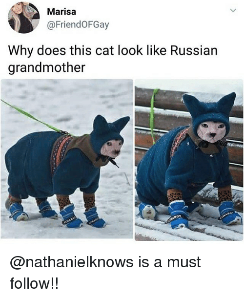 Cat Look: Marisa  @FriendOFGay  Why does this cat look like Russian  grandmother @nathanielknows is a must follow!!