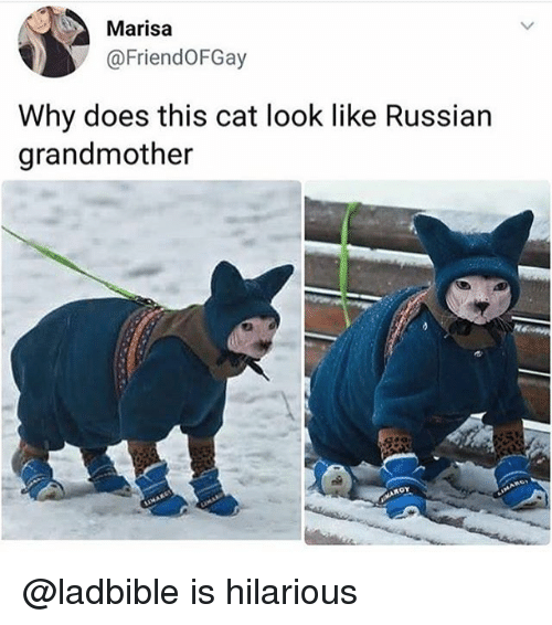 Cat Look: Marisa  @FriendoFGay  Why does this cat look like Russian  grandmother @ladbible is hilarious