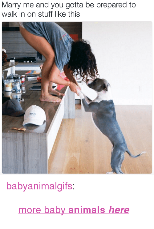 "Baby Animals: Marry me and you gotta be prepared to  walk in on stuff like this <p><a href=""http://babyanimalgifs.tumblr.com/post/147421558432/more-baby-animals-here"" class=""tumblr_blog"" target=""_blank"">babyanimalgifs</a>:</p>  <blockquote><p><a href=""http://babyanimalgifs.tumblr.com/"" target=""_blank"">more baby <b>animals <i>here</i></b></a></p></blockquote>"