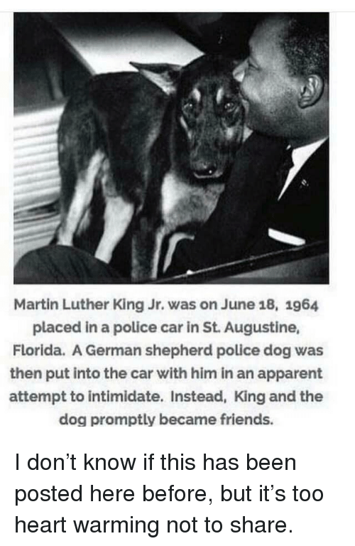 promptly: Martin Luther King Jr. was on June 18, 1964  placed in a police car in St. Augustine,  Florida. A German shepherd police dog was  then put into the car with him in an apparent  attempt to intimidate. Instead, King and the  dog promptly became friends. I don't know if this has been posted here before, but it's too heart warming not to share.