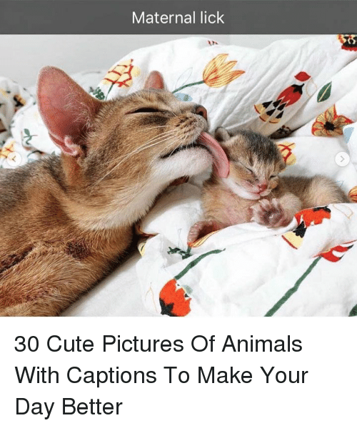 Animals, Cute, and Pictures: Maternal lick 30 Cute Pictures Of Animals With Captions To Make Your Day Better