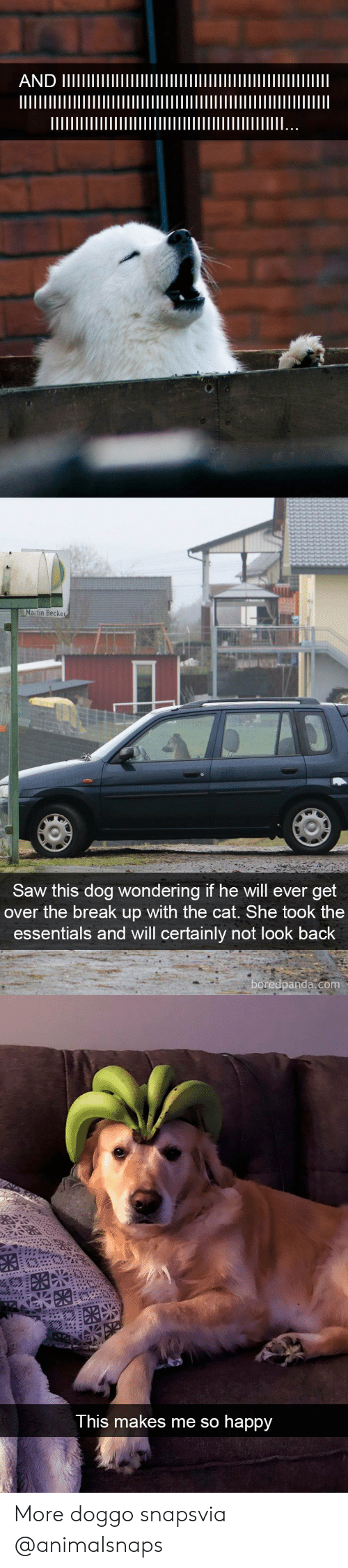 essentials: Matin Becker  Saw this dog wondering if he will ever get  over the break up with the cat. She took the  essentials and will certainly not look back  oredpanda.com   This makes me so happy More doggo snapsvia @animalsnaps