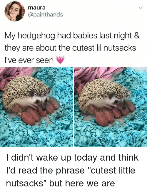 "Thinked: maura  @painthands  My hedgehog had babies last night &  they are about the cutest lil nutsacks  I've ever seen I didn't wake up today and think I'd read the phrase ""cutest little nutsacks"" but here we are"