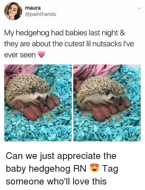 Hedgehoging: maura  @painthands  My hedgehog had babies last night &  they are about the cutest lil nutsacks l've  ever seen Can we just appreciate the baby hedgehog RN 😍 Tag someone who'll love this