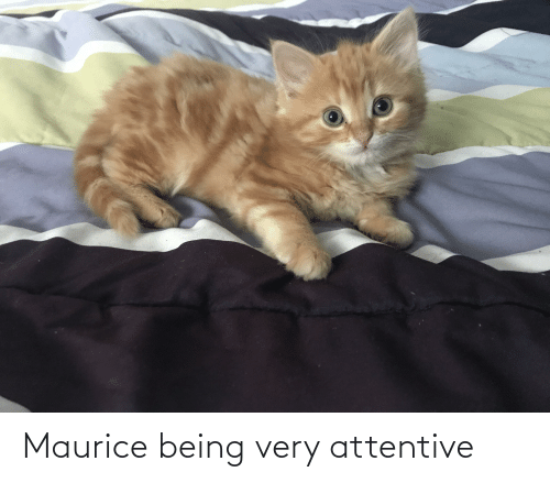 attentive: Maurice being very attentive
