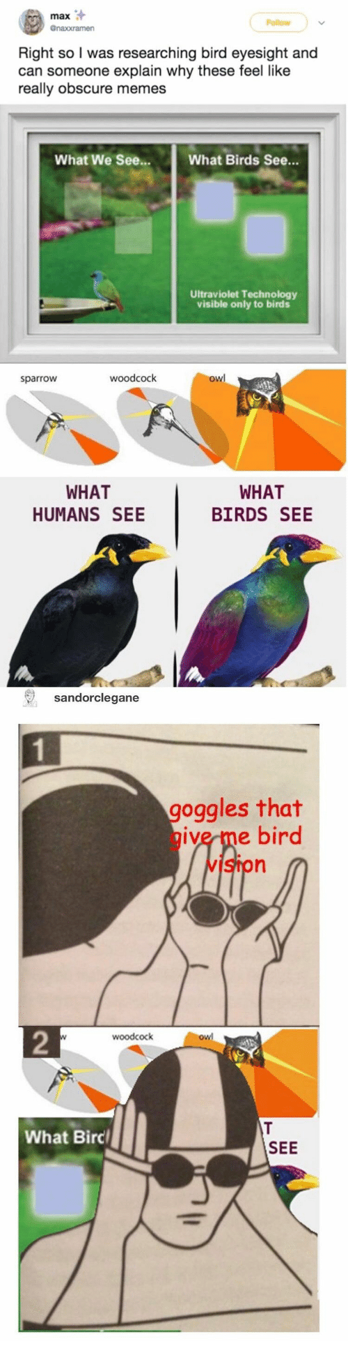 obscure: max  Follow  @naxxramen  Right so I was researching bird eyesight and  can someone explain why these feel like  really obscure memes  What We See...  What Birds See...  Ultraviolet Technology  visible only to birds  owl  woodcock  sparrow  WHAT  WHAT  HUMANS SEE  BIRDS SEE  sandorclegane  goggles that  give me bird  vIston  2  woodcock  owl  T  What Birc  SEE