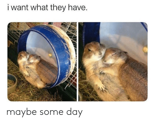 Some: maybe some day