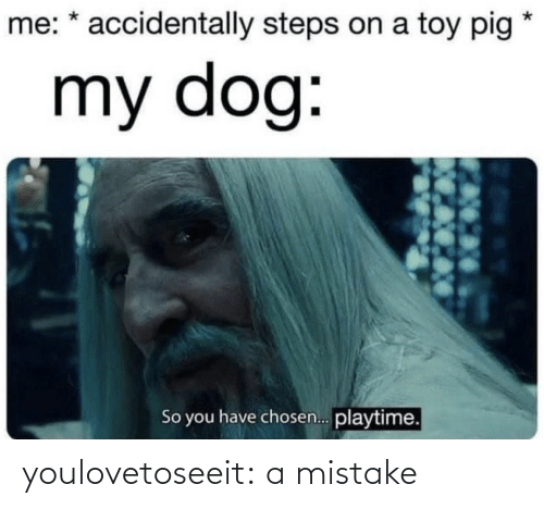 chosen: me: * accidentally steps on a toy pig  my dog:  So you have chosen. playtime. youlovetoseeit:  a mistake