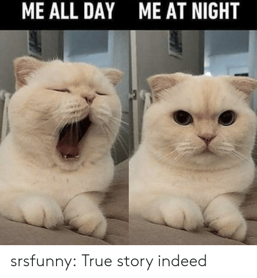 True, Tumblr, and Blog: ME ALL DAY  ME AT NIGHT srsfunny:  True story indeed