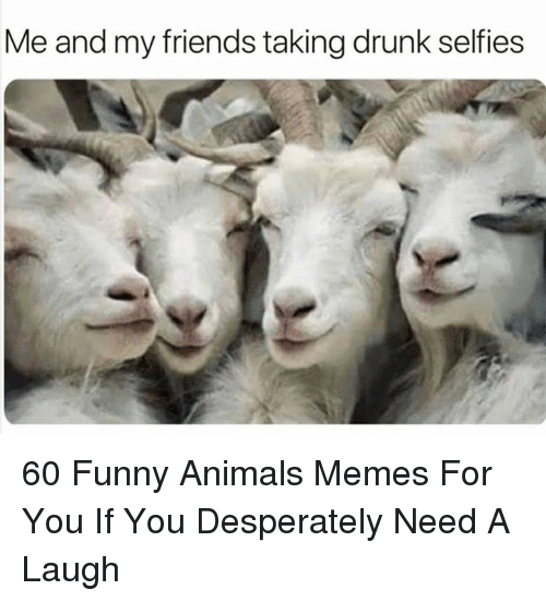 Animals, Drunk, and Friends: Me and my friends taking drunk selfies 60 Funny Animals Memes For You If You Desperately Need A Laugh