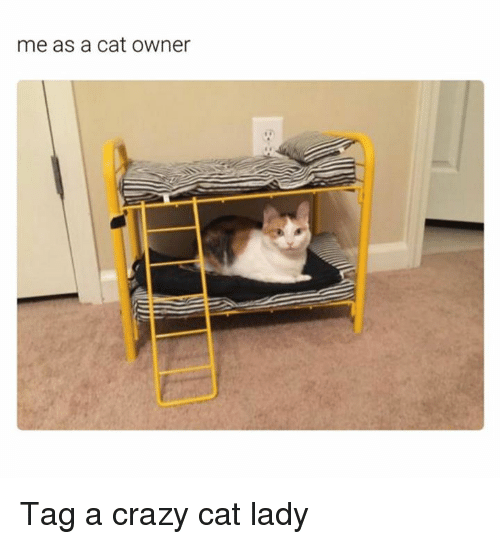 Crazy, Memes, and 🤖: me as a cat owner Tag a crazy cat lady
