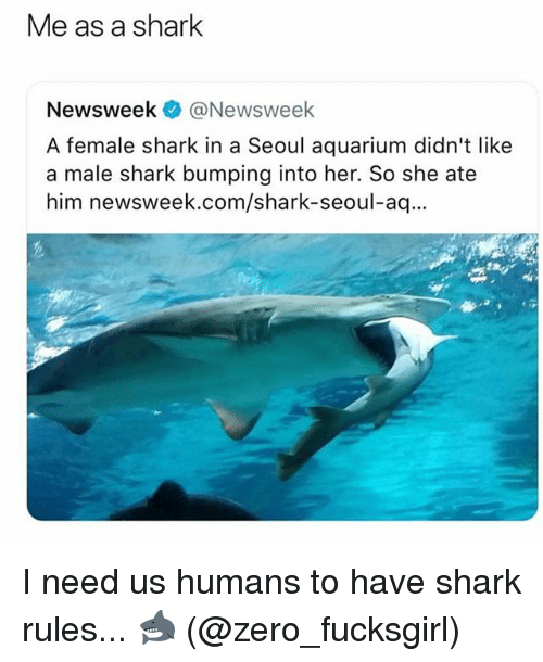 Zero, Shark, and Aquarium: Me as a shark  Newsweek @Newsweek  A female shark in a Seoul aquarium didn't like  a male shark bumping into her. So she ate  him newsweek.com/shark-seoul-aq I need us humans to have shark rules... 🦈 (@zero_fucksgirl)
