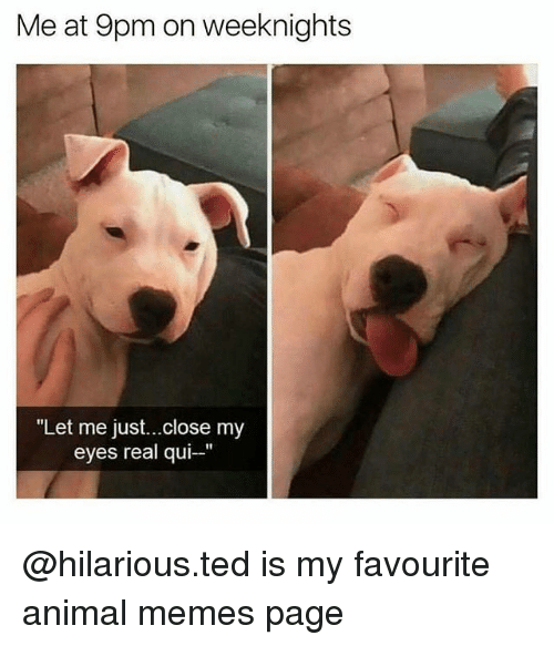 Memes, Ted, and Animal: Me at 9pm on weeknights  Let me just...close my  eyes real qui- @hilarious.ted is my favourite animal memes page