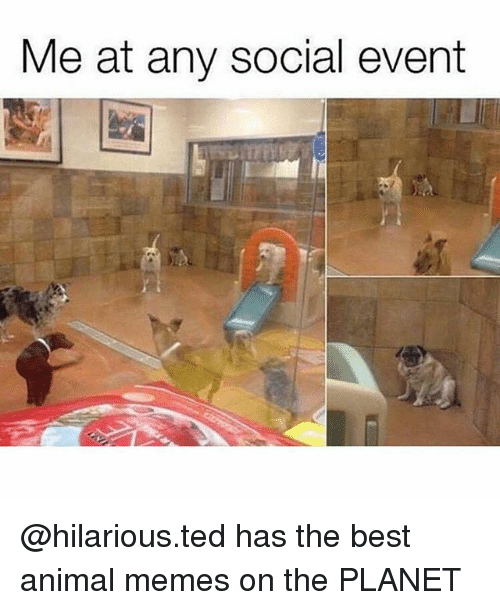 Best Animal Memes: Me at any social event @hilarious.ted has the best animal memes on the PLANET