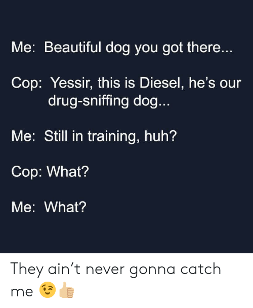Diesel: Me: Beautiful dog you got there...  Cop: Yessir, this is Diesel, he's our  drug-sniffing dog...  Me: Still in training, huh?  Cop: What?  Me: What? They ain't never gonna catch me 😉👍🏼