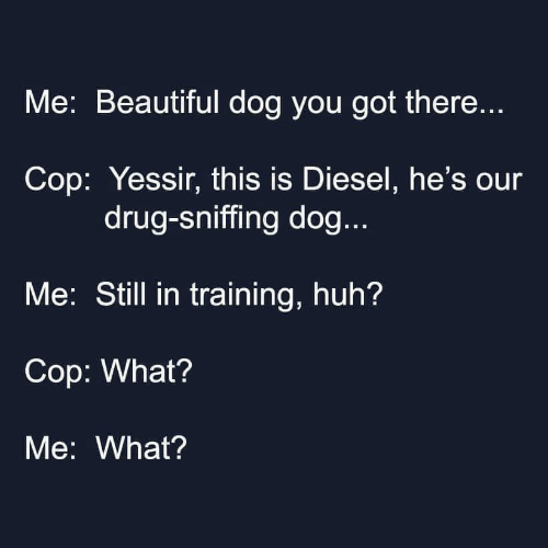Diesel: Me: Beautiful dog you got there...  Cop: Yessir, this is Diesel, he's our  drug-sniffing dog...  Me: Still in training, huh?  Cop: What?  Me: What?