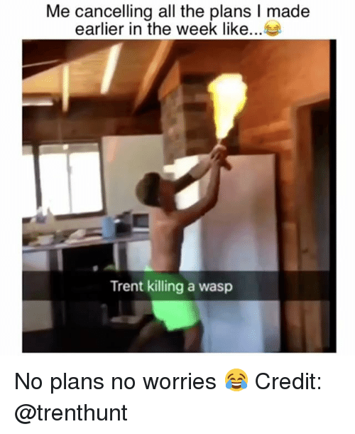 Memes, All The, and 🤖: Me cancelling all the plans I made  earlier in the week like  Trent killing a wasp No plans no worries 😂 Credit: @trenthunt