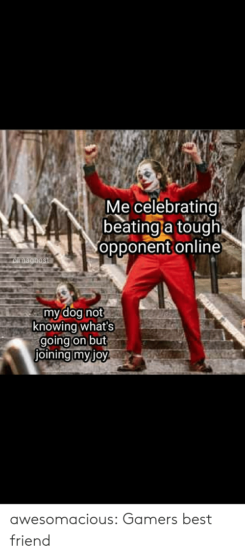 beating: Me celebrating  beating a tough  opponent online  oimaghost  my dog not  knowing what's  going on but  joining myjoy awesomacious:  Gamers best friend