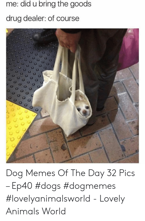 Goods: me: did u bring the goods  drug dealer: of course Dog Memes Of The Day 32 Pics – Ep40 #dogs #dogmemes #lovelyanimalsworld - Lovely Animals World