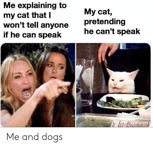 I Wont Tell: Me explaining to  my cat that I  won't tell anyone  if he can speak  My cat,  pretending  he can't speak Me and dogs