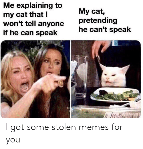 I Wont Tell: Me explaining to  my cat that I  won't tell anyone  if he can speak  My cat,  pretending  he can't speak I got some stolen memes for you