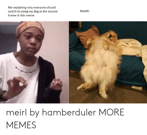 Everyone Should: Me explaining why everyone should  switch to using my dog as the second  Reddit:  frame of this meme: meirl by hamberduler MORE MEMES