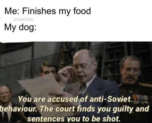 Soviet: Me: Finishes my food  U/natmatfoo  My dog:  You are accused of anti-Soviet.  behaviour. The court finds you guilty and  sentences you to be shot.