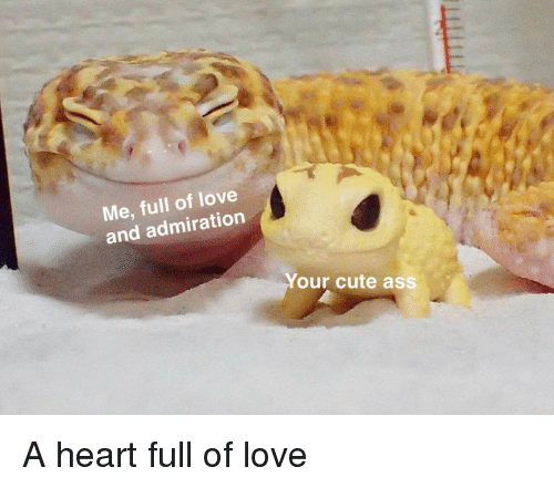 Your Cute: Me, full of love  and admiration  Your cute ass <p>A heart full of love</p>