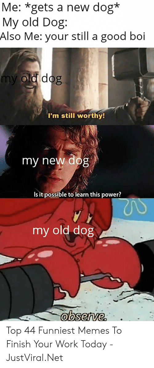 Memes, Work, and Good: Me: *gets a new dog*  My old Dog  Also Me: your still a good boi  my old dog  I'm still worthy!  my new dog  Is it possible to learn this power?  my old dog Top 44 Funniest Memes To Finish Your Work Today - JustViral.Net