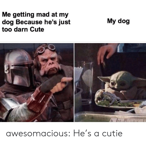 cutie: Me getting mad at my  dog Because he's just  too darn Cute  My dog awesomacious:  He's a cutie