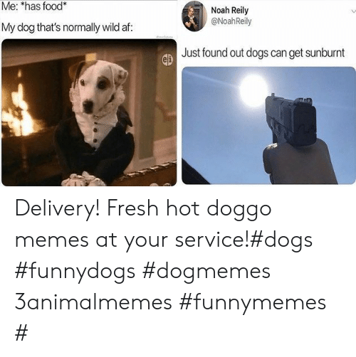 Af, Dogs, and Food: Me: *has food*  Noah Reily  @NoahReily  My dog that's normally wild af:  Just found out dogs can get sunburnt Delivery! Fresh hot doggo memes at your service!#dogs #funnydogs #dogmemes 3animalmemes #funnymemes #