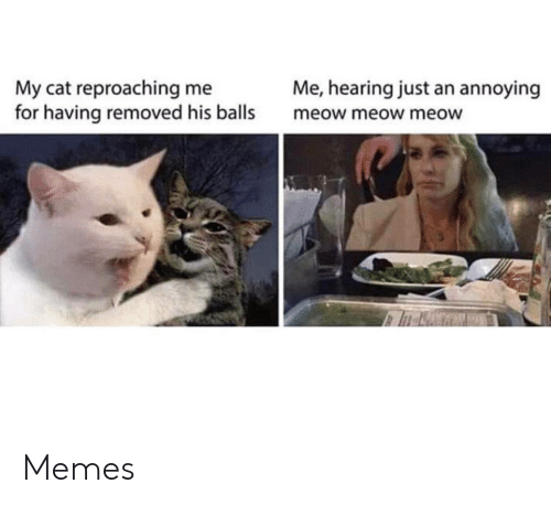 Annoying: Me, hearing just an annoying  My cat reproaching me  for having removed his balls  meow meow meow Memes