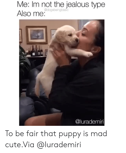 Cute, Instagram, and Jealous: Me: Im not the jealous type  Also me:  Odogsbeingbasic  @lurademiri To be fair that puppy is mad cute.Via @lurademiri